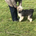 puppycursus privé hondentraining