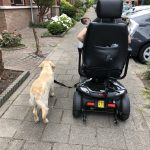 golden retriever, privé training, privé hondentraining, scootmobiel, hulphond