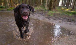 gehoorzaamheid, hondenschool, training