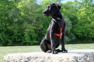 gehoorzaamheid, hondenschool, hond training