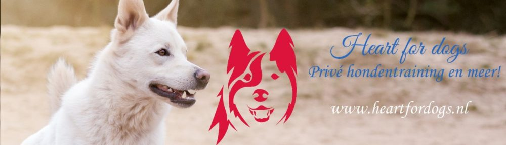hondenschool, heart for dogs, prive hondentraining, zoetermeer