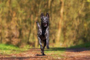 uitlaatservice, zoetermeer, hond, training, hondenuitlaatservice